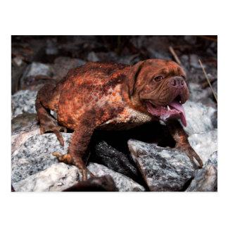 Bordeaux frog postcard