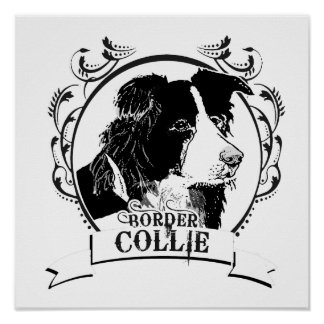 BORDER COLLIE 2 POSTER