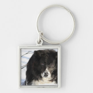 border-collie-8.jpg Silver-Colored square keychain
