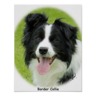 Border Collie 9A14D-25 Posters