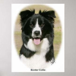 Border Collie 9Y411D-009 Poster