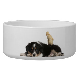 Border Collie and a Duckling Bowl Pet Bowl