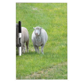 Border Collie and Ewe Dry-Erase Whiteboards