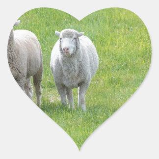 Border Collie and Ewe Heart Sticker
