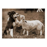 """""""Border Collie and Lamb""""~Border Collie Poster"""