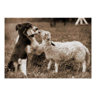 """Border Collie and Lamb""~Poster Poster"