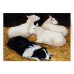 """Border Collie and Sheep"" Dog Art Greeting Card"