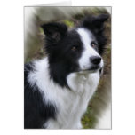Border Collie Art Gifts Greeting Cards