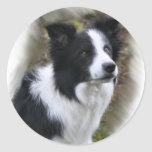 Border Collie Art Gifts Stickers