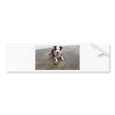 Beach Themed Border collie at the beach bumper sticker
