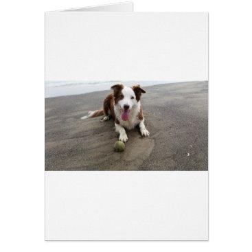 Beach Themed Border collie at the beach card