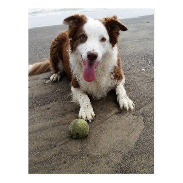 Beach Themed Border collie at the beach postcard