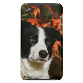 Border Collie Autumn Headshot iPod Touch Covers