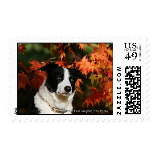 Border Collie Autumn Headshot Stamps