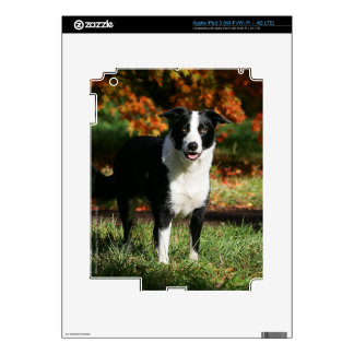 Border Collie Autumn Standing Decal For iPad 3