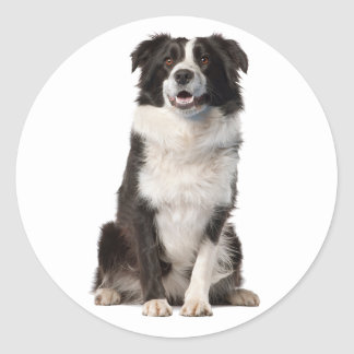 BORDER COLLIE BLACK AND WHITE PUPPY DOG CLASSIC ROUND STICKER