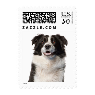 Border Collie Black And White Puppy Dog Postage
