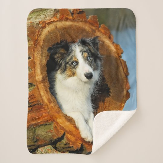 border collie blue merle dog head photography on - sherpa blanket