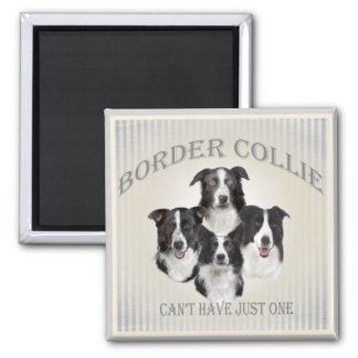 Border Collie Can't Have Just One Gifts Magnets
