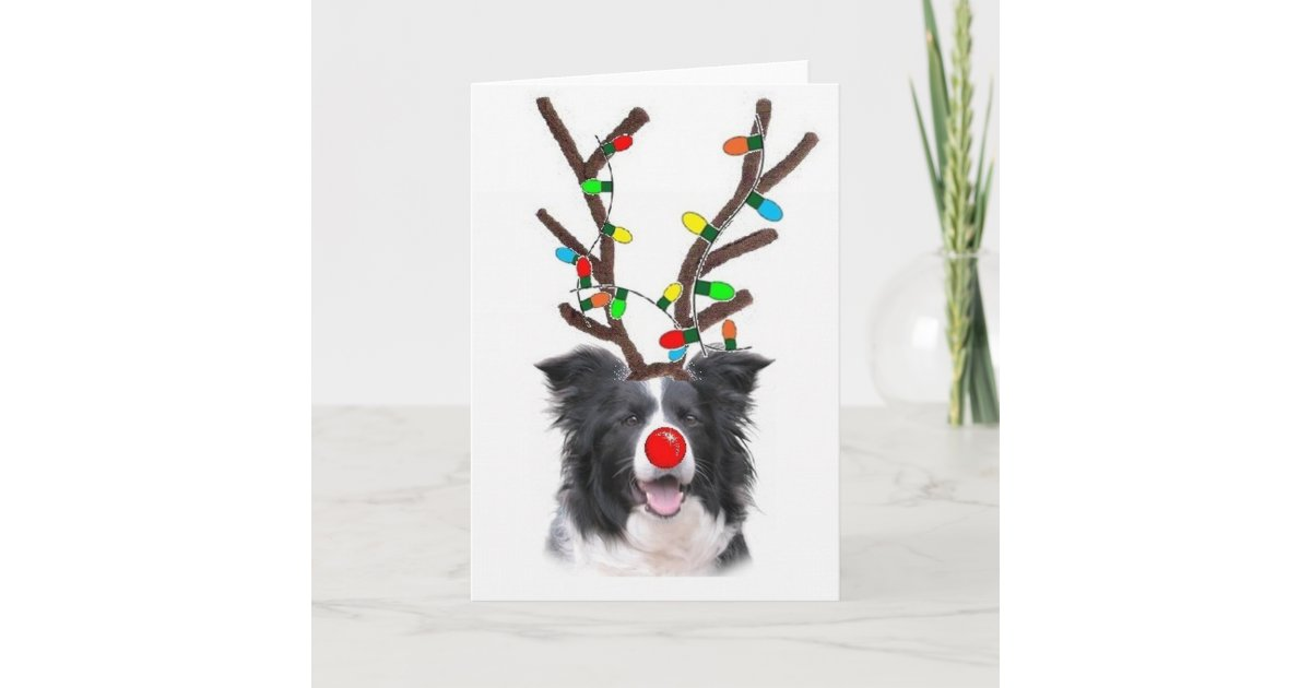 Border Collie Christmas Card~Rudolph Holiday Card | Zazzle.com