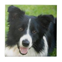 Border Collie Dog Add Text Pet Ceramic Tile