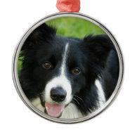 Border Collie Dog Add Text Pet Ornaments