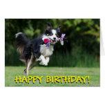 Border collie dog birthday card