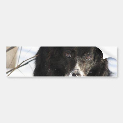 Border Collie Dog  Bumper Stickers
