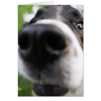 Border Collie Dog Face Close-up Greeting Card