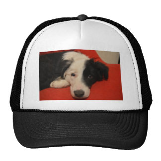 border collie dog mesh hats