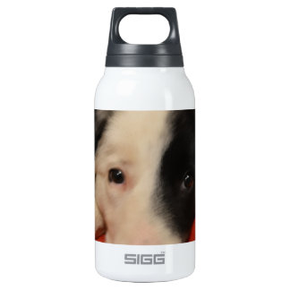 border collie dog insulated water bottle