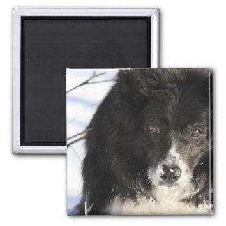 Border Collie Dog Magnet