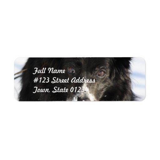 Border Collie Dog  Mailing Labels