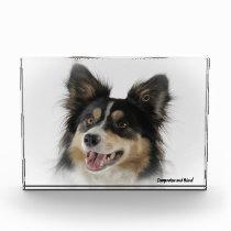 Border Collie Dog. Photo Block
