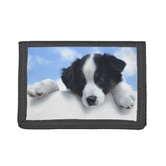 Border collie dog photography. trifold wallet