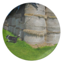 Border Collie dog Playing in a Farmers Field Dinner Plate