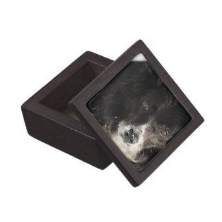Border Collie Dog Premium Gift Box