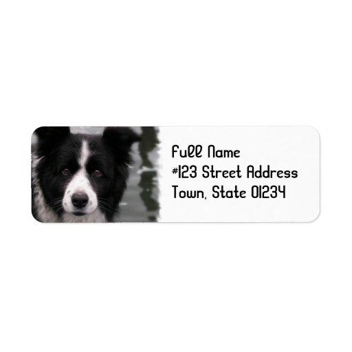 Border Collie Dog Return Address Label