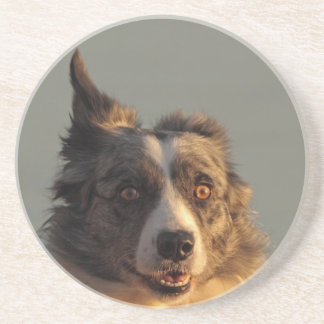 Border Collie Dog Running Coaster