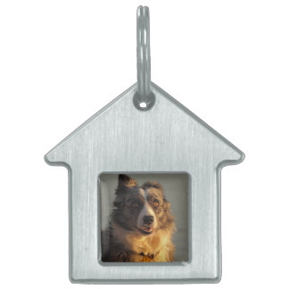 Border Collie Dog Running  House Pet Tag
