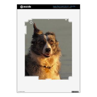 Border Collie Dog Running iPad 3 Skin