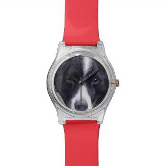 Border Collie dog watch