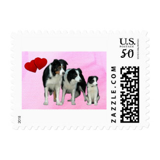 Border Collie Dogs Heart stamp