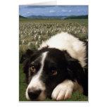 Border Collie Dreams Notecard Card