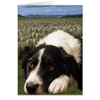 Border Collie Dreams Notecard Stationery Note Card