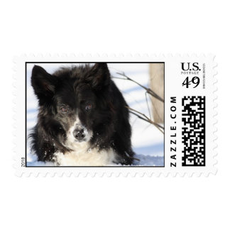 Border collie en la nieve sello