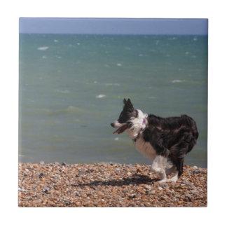Border collie en la playa azulejo cuadrado pequeño