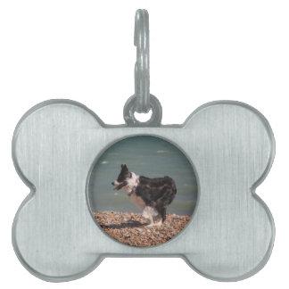 Border collie en la playa placa de mascota