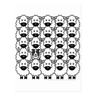 Border collie en las ovejas tarjeta postal