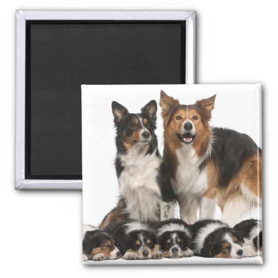 Border collie family magnet